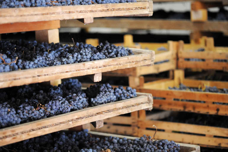 Druiven drogen voor Amarone Fotalia