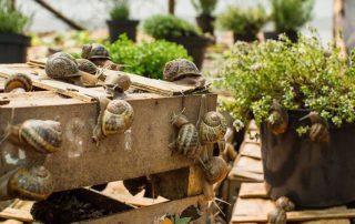 Slow Escargots en planten