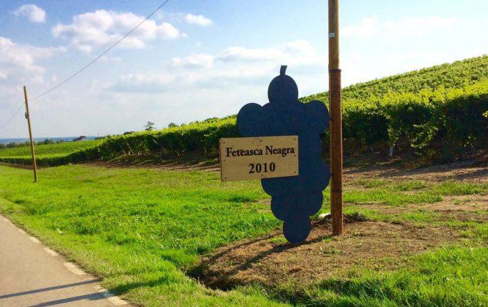 Ga je mee? Onvergetelijke wijnreis naar… Roemenië!