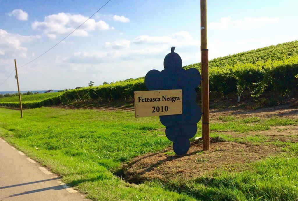 Wijnreis naar Roemenië Feteasca bord Anne-Wies.NL