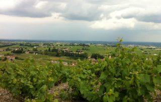 Beaujolais wijngaarden 2013