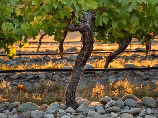 wijngaard-stoneleigh