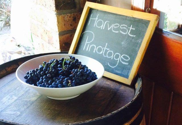 Pinotage, een wijn met veel gezichten: Geniet het!