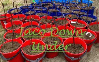 Jaco nieuwe aanplant 1 uitgelicht