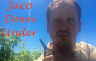 Jaco down under met knipschaartje en zon uitgelicht