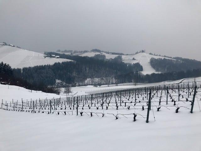 Wijngaard Steiermark Oostenrijk in de winkter met sneeuw