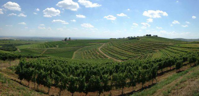 Wijnreis naar Roemenie 2 wijngaarden foto Roemwijn