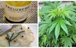 Cannabis Wijn en Spijs uitgelicht