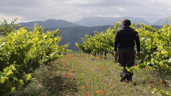 Wijnstudiereis Claudia van Dongen man in wijngaard