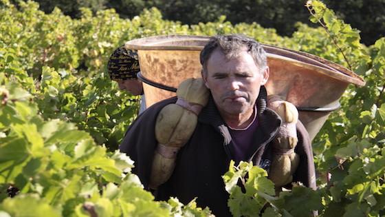 Wijnstudiereis Claudia van Dongen man met mand