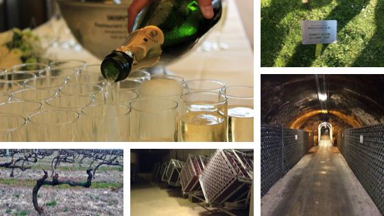 Hoe wordt champagne gemaakt uitgelicht