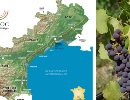 Pays d'Oc as tasted by Elizabeth Gabay MW: Grenache Noir