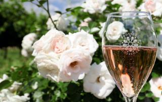 Prosecco rose uitgelicht